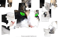 Green Eyes Puzzle